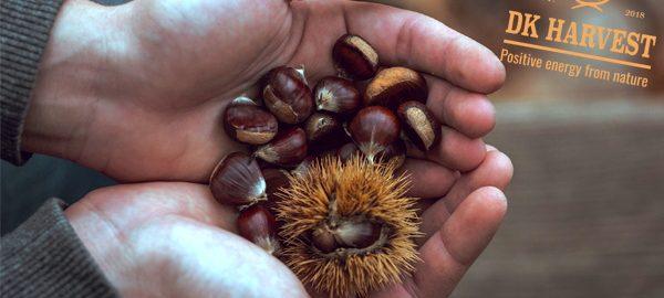 Hạt dẻ – Tổng quan về hạt dẻ và những tác dụng của nó