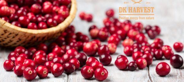 Nam việt quất – Cranberry là gì? So sánh Nam Việt Quất và Việt Quất