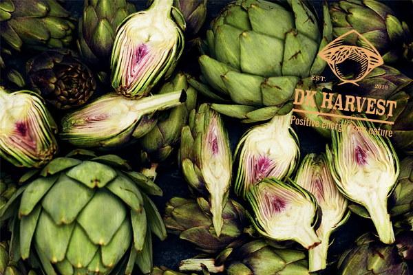Hoa atiso – Những công dụng của hoa atiso mà không phải ai cũng biết