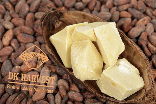 Bơ cacao – Tác dụng và cách sử dụng bơ cacao hiệu quả